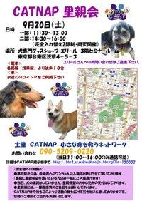 080920_catnap1