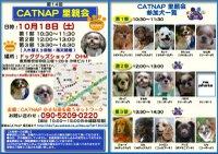 081018_catnap2