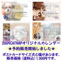 081231_catnap_cal2