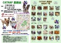 081115_catnap2
