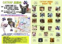 081213_catnap2