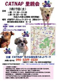 20090117_catnap