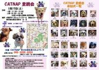 20090117_catnap2