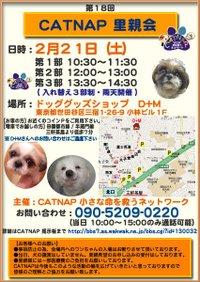 20090221_catnap