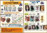 20090221_catnap2