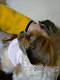 20090217_asuka1