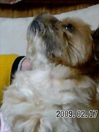 20090217_asuka2