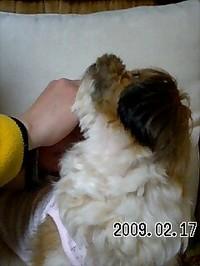 20090217_asuka3