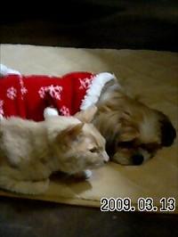 20090313_asuka_sharp1