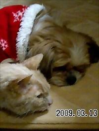 20090313_asuka_sharp2