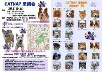 20090321_catnap4