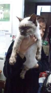 20090322_lost_cat2