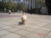 20090412_komazawa3_2