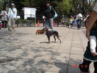 20090412_komazawa6_2