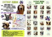 20090418_catnap2