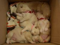 20090427_puppy1