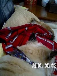 20090508_bobby_asuka