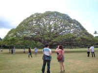20090515_hawaii3