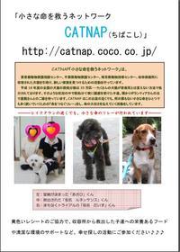 20090609_catnap