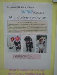 20090611_catnap1