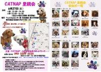20090627_catnap2_2