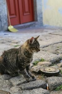 20091017_catnap