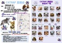 20090926_catnap3