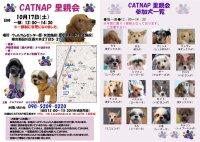 20091017_catnap4