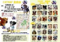 20091205_catnap2