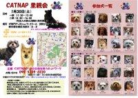 20100130_catnap2