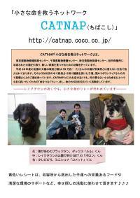20100211_catnap