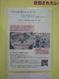 20100311_kiiro
