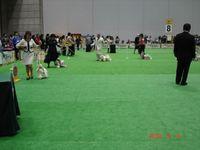 20100403_fci19